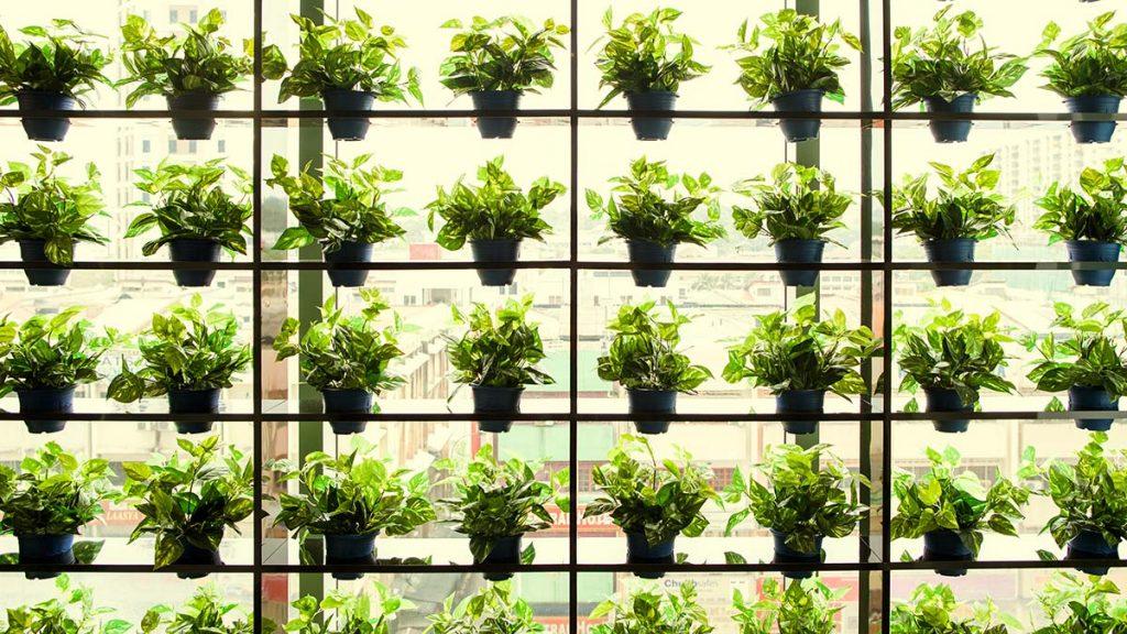 Future Gardening
